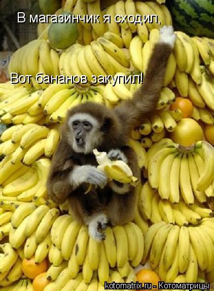 Котоматрица: В магазинчик я сходил, Вот бананов закупил!