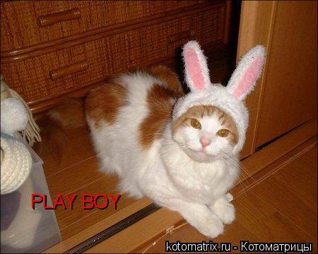 Котоматрица: PLAY BOY
