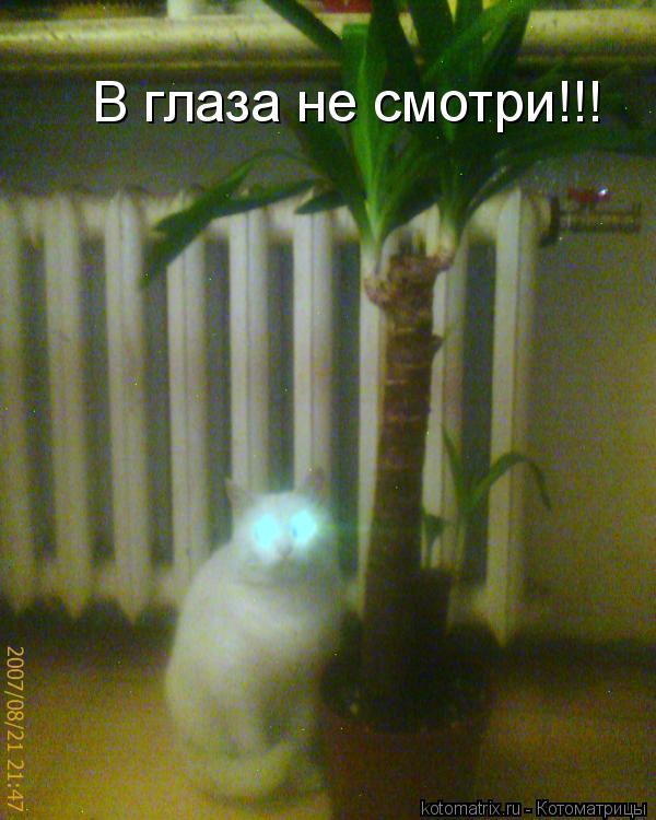 Котоматрица: В глаза не смотри!!!