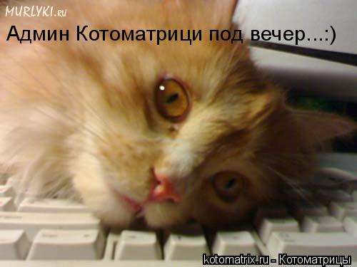 Котоматрица: Админ Котоматрици под вечер...:)