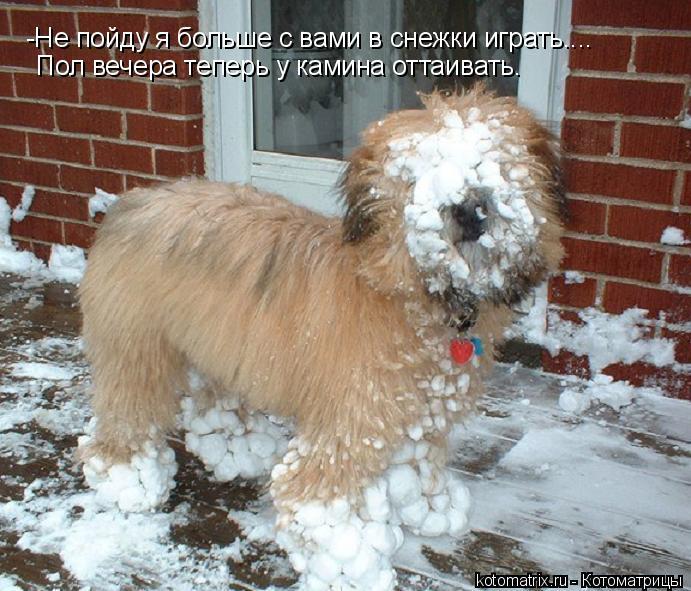 Котоматрица: -Не пойду я больше с вами в снежки играть.... Пол вечера теперь у камина оттаивать.