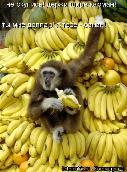 Котоматрица: не скупись! держи шире карман! ты мне доллар! я тебе - банан!