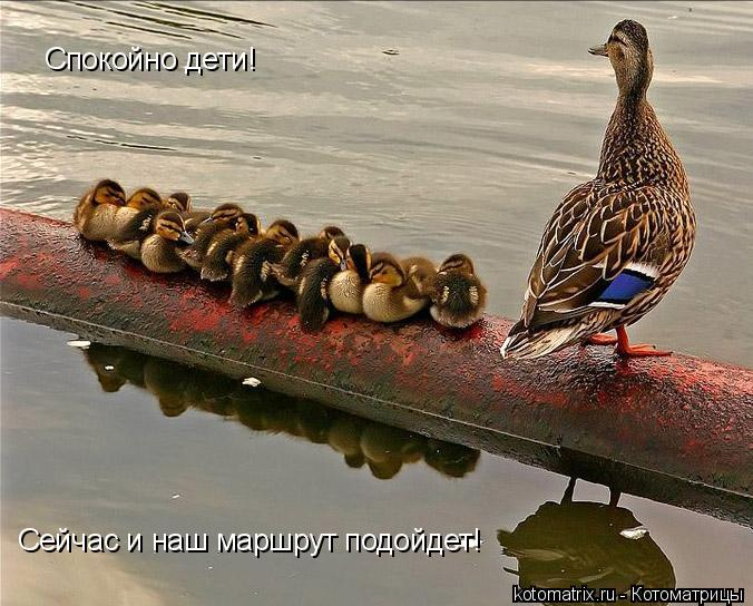 Котоматрица: Спокойно дети! Сейчас и наш маршрут подойдет!
