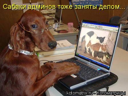 Котоматрица: Сабаки админов тоже заняты делом...