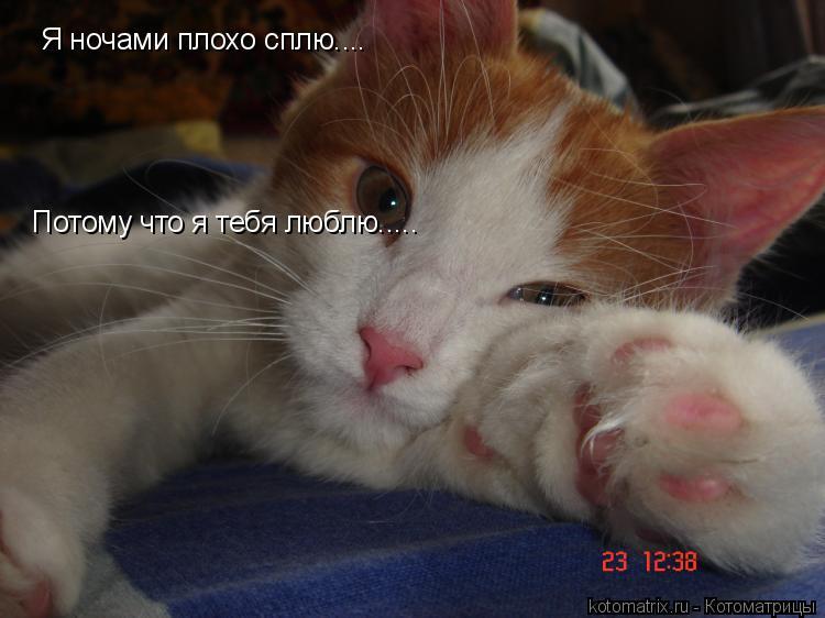 Котоматрица: Я ночами плохо сплю.... Потому что я тебя люблю.....
