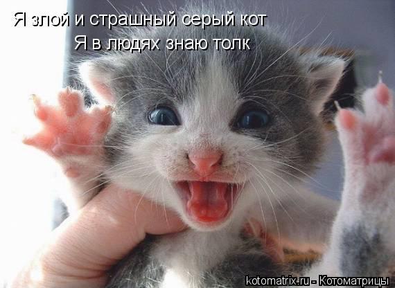 Котоматрица: Я злой и страшный серый кот  Я в людях знаю толк