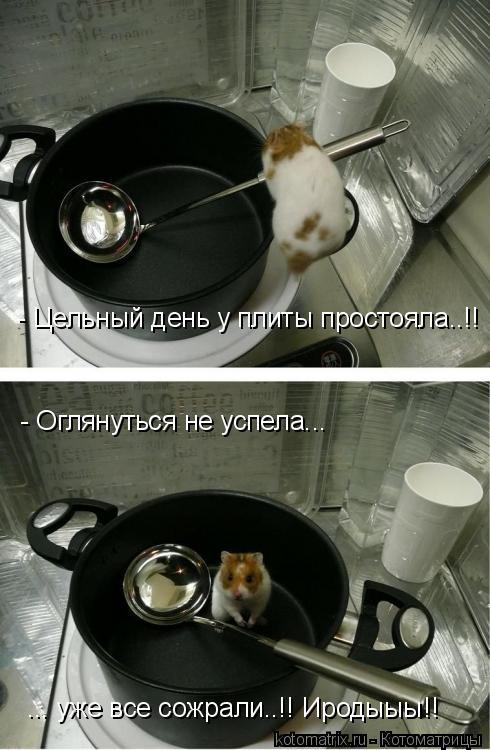 Котоматрица: - Цельный день у плиты простояла..!! - Оглянуться не успела... ... уже все сожрали..!! Иродыыы!!