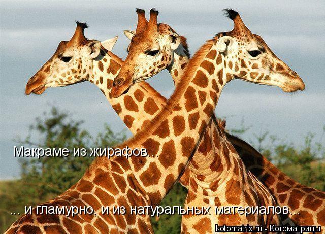 Котоматрица: Макраме из жирафов... ... и гламурно, и из натуральных материалов...