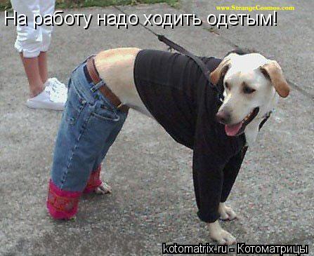 Котоматрица: На работу надо ходить одетым!