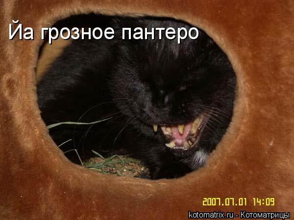 Котоматрица: Йа грозное пантеро
