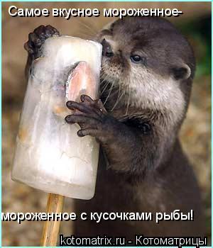 Котоматрица: Самое вкусное мороженное- мороженное с кусочками рыбы!