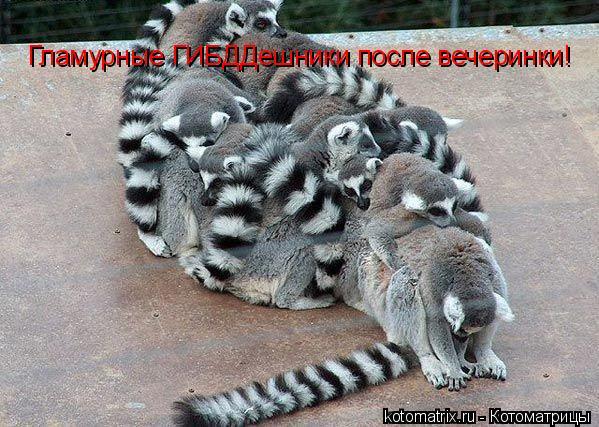 Котоматрица: Гламурные ГИБДДешники после вечеринки!