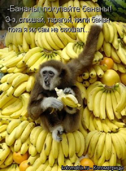Котоматрица: -Бананы, покупайте бананы! Э-э, слюшай, тарагой, кюпи банан пока я их сам не скюшал...