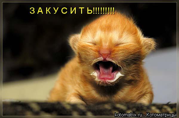 Котоматрица: З А К У С И Т Ь!!!!!!!!!