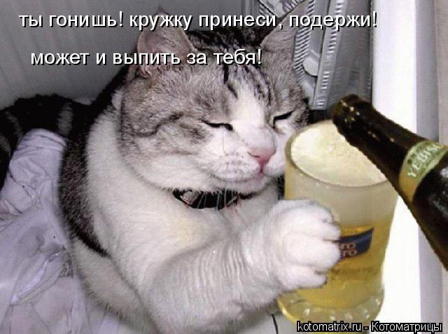 Котоматрица: ты гонишь! кружку принеси, подержи! может и выпить за тебя!