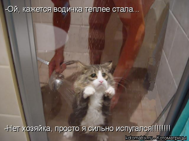 Котоматрица: -Ой, кажется водичка теплее стала... -Нет хозяйка, просто я сильно испугался!!!!!!!!
