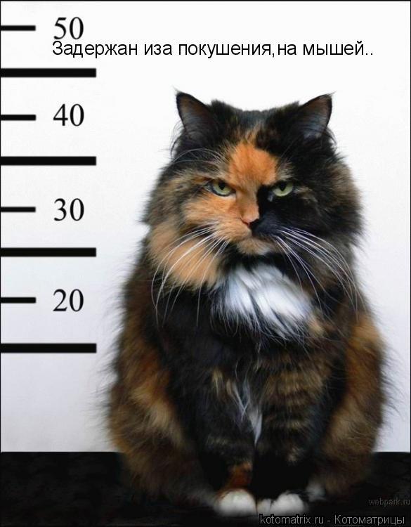 Котоматрица: Задержан иза покушения,на мышей..