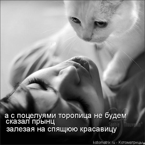 Котоматрица: а с поцелуями торопица не будем сказал прынц залезая на спящюю красавицу