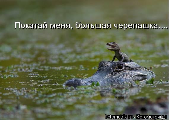 Котоматрица: Покатай меня, большая черепашка....