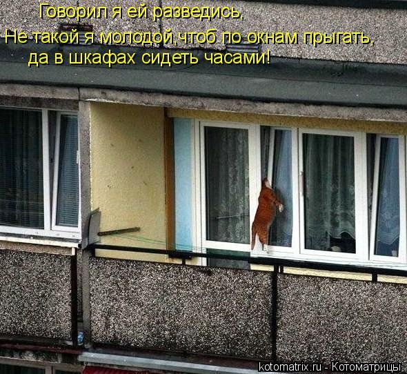 Котоматрица: Говорил я ей разведись, Не такой я молодой,чтоб по окнам прыгать, да в шкафах сидеть часами!
