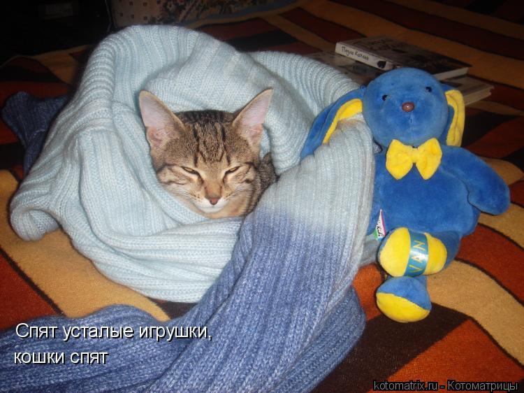 Котоматрица: Спят усталые игрушки, кошки спят