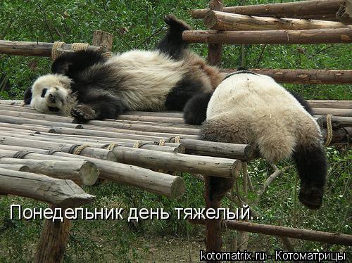 Котоматрица: Понедельник день тяжелый...