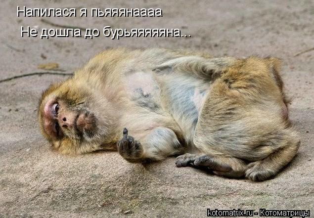 Котоматрица: Напилася я пьяяянаааа Не дошла до бурьяяяяяна...