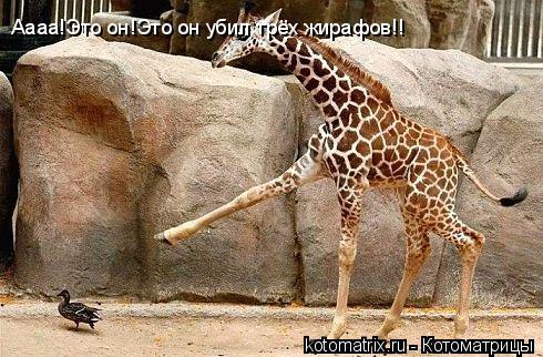 Котоматрица: Аааа!Это он!Это он убил трёх жирафов!!