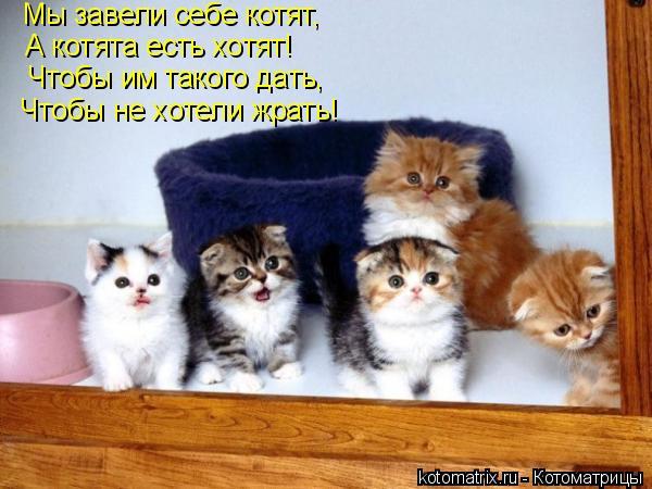 Котоматрица: Мы завели себе котят, А котята есть хотят! Чтобы им такого дать, Чтобы не хотели жрать!