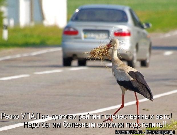 Котоматрица: Резко УПАЛ на дорогах рейтинг отечественных авто! Надо бы им болезным соломки подстелить!!