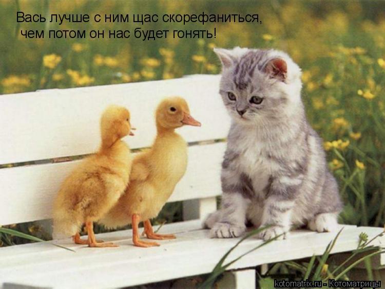 Котоматрица: Вась лучше с ним щас скорефаниться, чем потом он нас будет гонять!