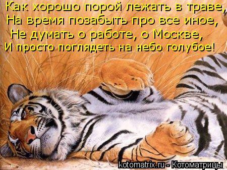 Котоматрица: Как хорошо порой лежать в траве, На время позабыть про все иное, Не думать о работе, о Москве, И просто поглядеть на небо голубое!