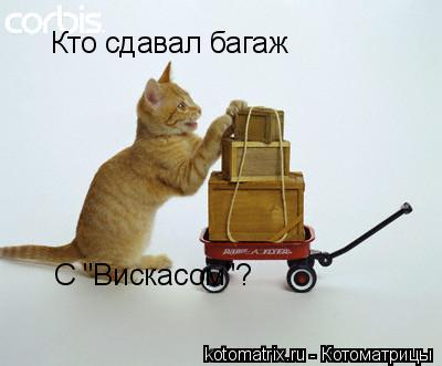 "Котоматрица: Кто сдавал багаж С ""Вискасом""?"