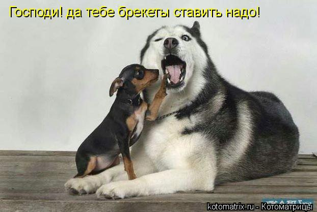Котоматрица: Господи! да тебе брекеты ставить надо!