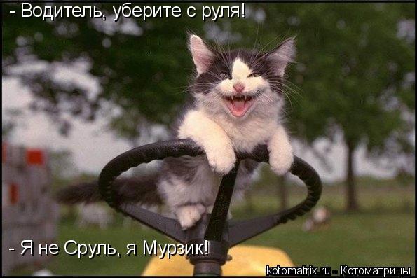 Котоматрица: - Водитель, уберите с руля! - Я не Сруль, я Мурзик!