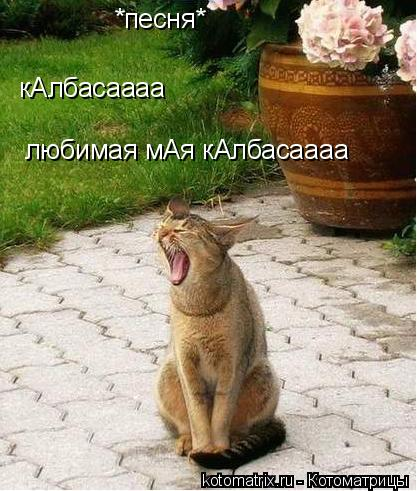 Котоматрица: *песня* кАлбасаааа любимая мАя кАлбасаааа