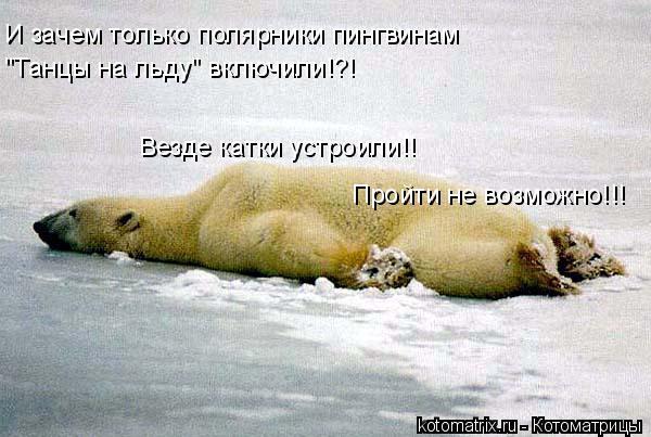 """Котоматрица: И зачем только полярники пингвинам """"Танцы на льду"""" включили!?! Везде катки устроили!! Пройти не возможно!!!"""