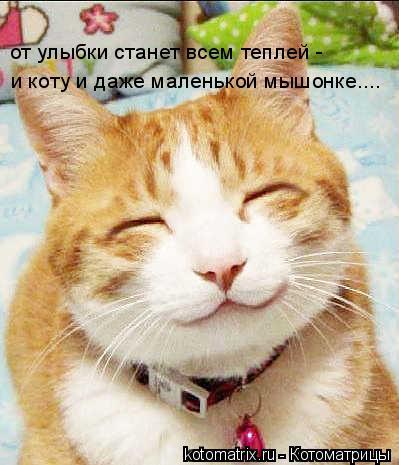Котоматрица: от улыбки станет всем теплей - и коту и даже маленькой мышонке....