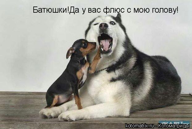 Котоматрица: Батюшки!Да у вас флюс с мою голову!