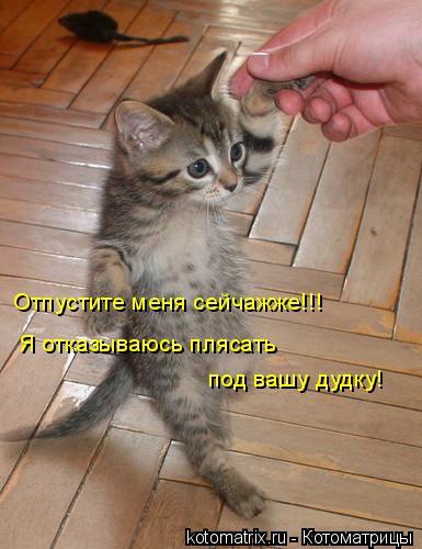 Котоматрица: Отпустите меня сейчажже!!! Я отказываюсь плясать  под вашу дудку!