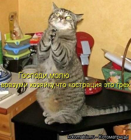 Котоматрица: Господи,молю вразуми хозяйку,что кострация это грех!