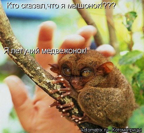 Котоматрица: Кто сказал,что я мышонок!??? Я летучий медвежонок!