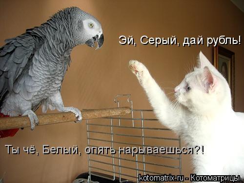 Котоматрица: Эй, Серый, дай рубль! Ты чё, Белый, опять нарываешься?!