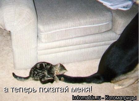 Котоматрица: а теперь покатай меня!