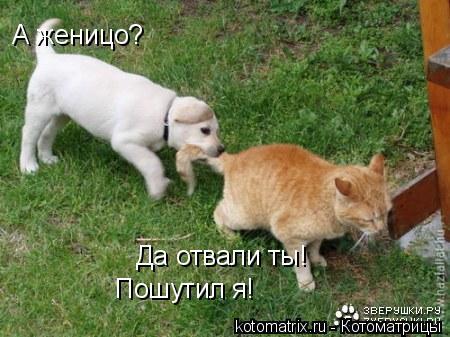 Котоматрица: А женицо? Да отвали ты! Пошутил я!