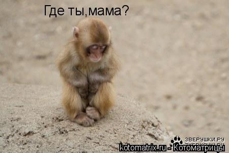 Котоматрица: Где ты,мама?