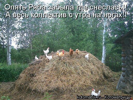 Котоматрица: Опять Ряба забыла где снеслась!! А весь коллектив с утра на ногах!!