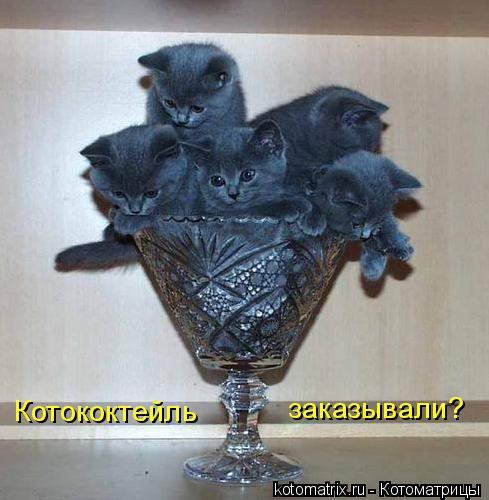 Котоматрица: Котококтейль  заказывали?