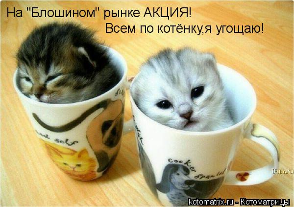 "Котоматрица: На ""Блошином"" рынке АКЦИЯ! Всем по котёнку,я угощаю!"
