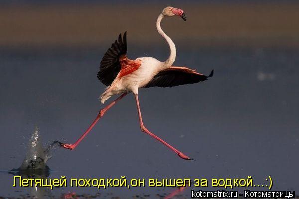 Котоматрица: Летящей походкой,он вышел за водкой...:)